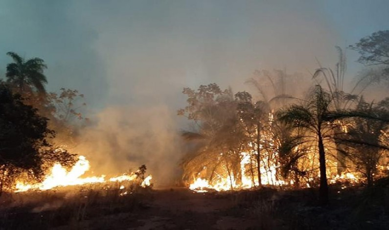 En América del Sur la naturaleza se quema y la política se agota