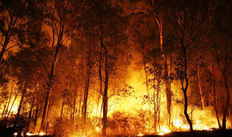 Orden, progreso y fuego: la bolsonarización de las políticas ambientales